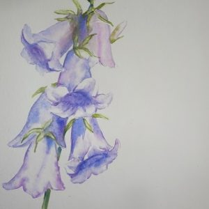 Watercolour Painting: Campanula @ Barnsdale Gardens